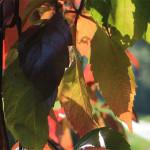 Bunte Blätter am Weg