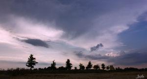 Allee von Bäumen mit lila Wolken