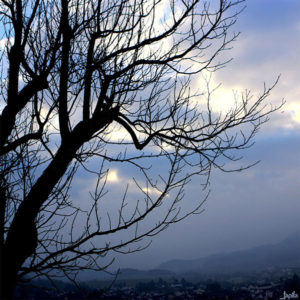 Baum am frühen Abend