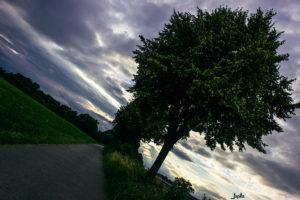Baum in schräger Position