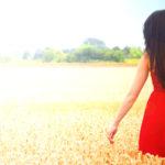 Sommer im Feld