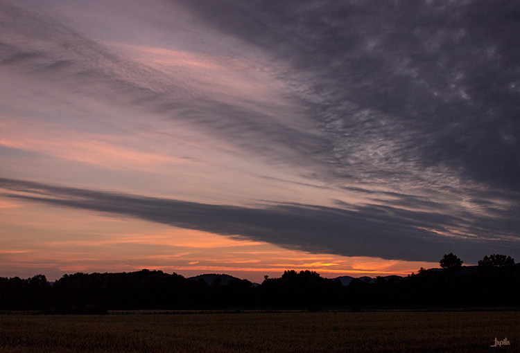 Morgenrot im Feld