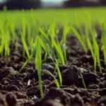 Grün auf dem Ackerboden