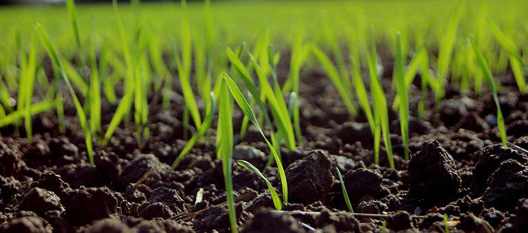 Gras Vorschaubild