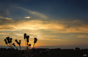 Pflanze vor dem Sonnenuntergang