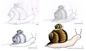 Schrittabfolge der Schnecken Zeichnung