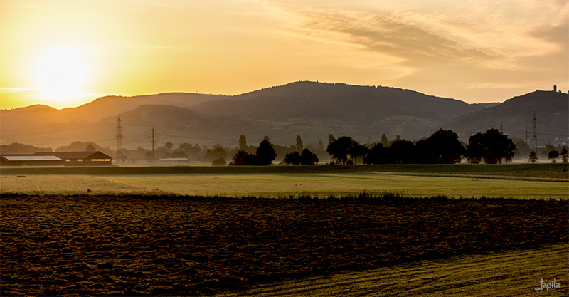 Sonnenaufgang im Feld