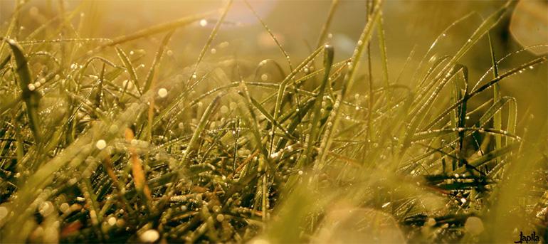 Tau auf Gras am Morgen