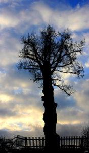 Baum vor Abendsonne