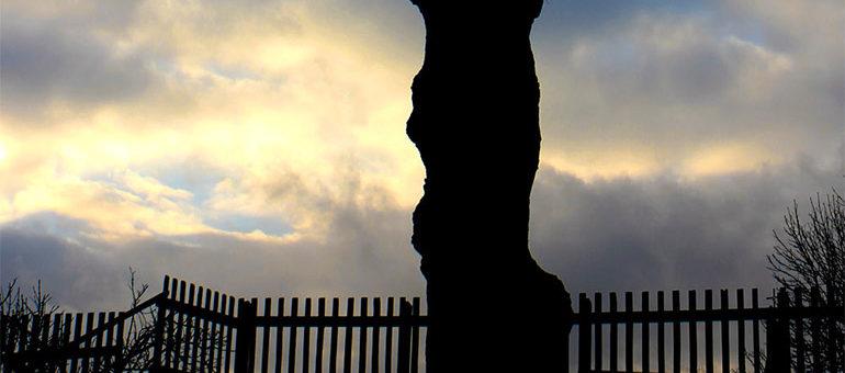 Baum Vorschaubild
