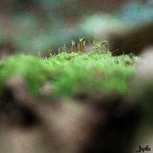 Moos im Wald