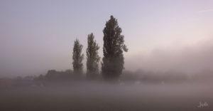 Baeume-im-Nebel-am-Morgen
