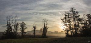 Feldrand-im-Nebel